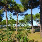 La pinède vue de la promenade d'Arglès-sur-mer